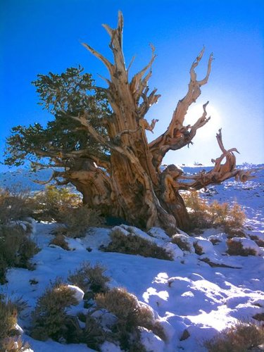 "Bristlecone National Forest (Tagged ""0"")"
