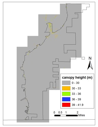 Canopy height model of Overflow National Wildlife Refuge