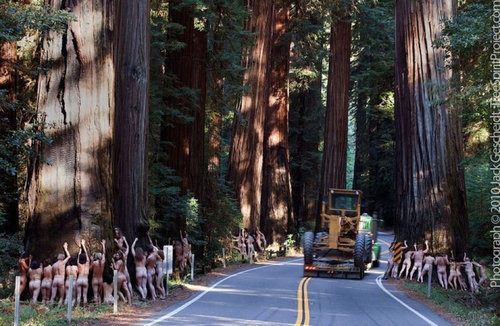 I believe this was a peaceful protest of a realignment of the curvy road through Richardson Grove, some years back...