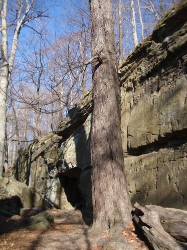 Ledges and red maple.jpg