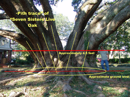 Seven Sisters pith trace-small.jpg