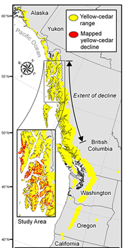 Yellow-cedar trees grow in California to Prince William Sound in Alaska. Yellow-cedar decline occurs along a 600-mile zone from British Columbia to southeast Alaska; and on about one-half million acres in southeast Alaska. Map: Colin Shanley, The Nature Conservancy