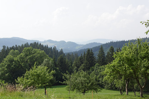 Vista from the farm. Fruit trees, foreground; Norway spruce dominated forest, background.