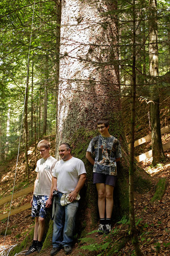 Grega Sgerm, the owner's son; Blaž Kristan, the owner; and Matic Kristan, the owner's son, at the Sgerm Spruce. Also European silver fir sapling, foreground, and European beech, right.