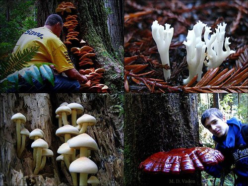 redwoods_mushrooms_780.jpg